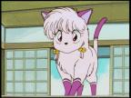 Shampoo (Cat)